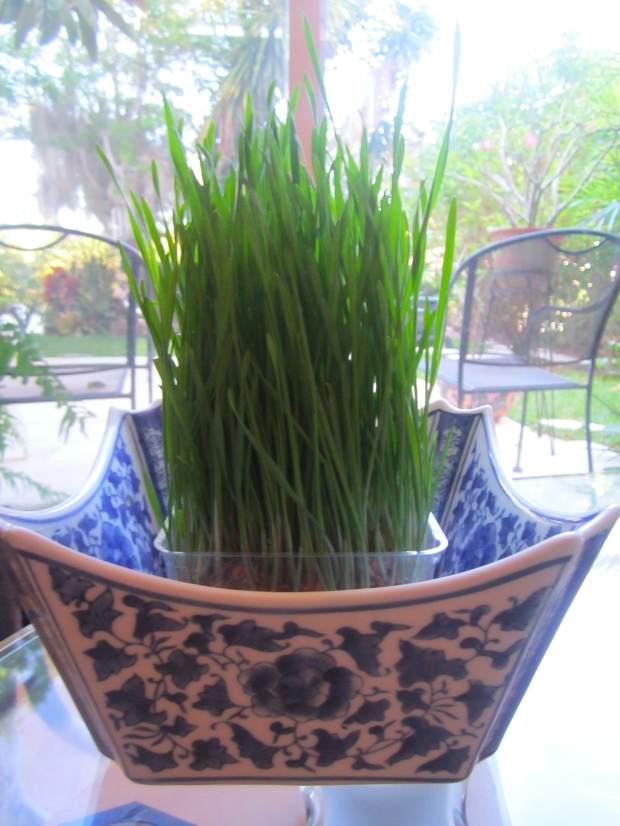 this weeks herb bush :   Chives