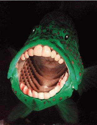 FishBigMouthTeeth