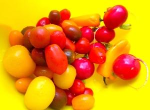 rainbow tomatoes, radish. mild chilies