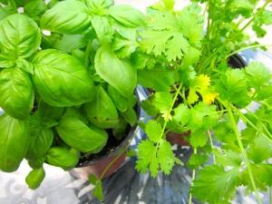 fresh herbs, always at hand.....