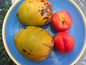 wash, peel and pit two very ripe mangoes and two ripe nectarines